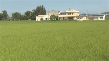 稻田停灌補助開放農民申請 地瓜農怨只補助稻作不公平