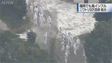 禽流感連環爆 九州福岡撲殺逾9萬隻雞