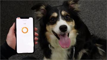 毛小孩到底在想什麼?南韓研發AI智慧項圈讀懂狗狗心聲 還能追蹤活動量
