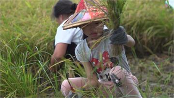 親自參與作物培育 台灣「食農教育」進校園
