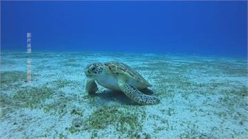 「海底忙什麼」紀錄片 一窺珍貴海洋生物世界