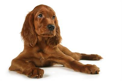狗也會自彈自唱!明星架式不輸人