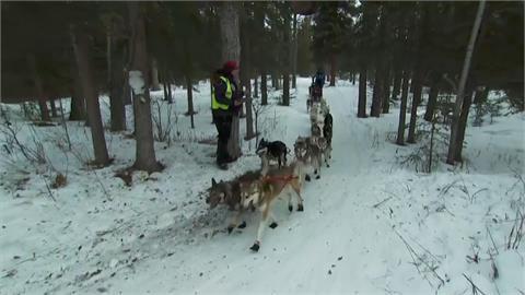 狗拉雪橇賽路程崎嶇 美國參賽者受傷退賽