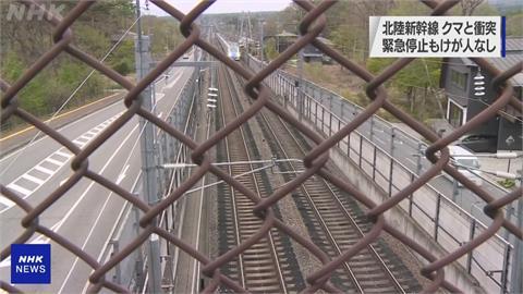 北陸新幹線行經長野輕井澤路段 列車撞上熊