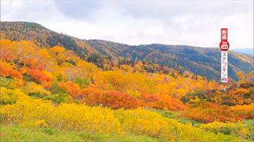 北海道旅遊補助來了!5日團費最低2萬有找