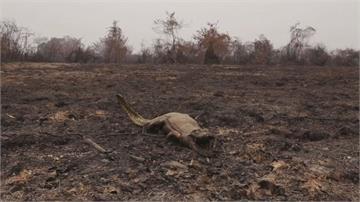 野生動物半世紀消亡近七成 人類難辭其咎