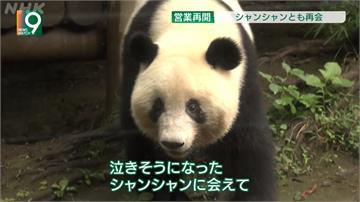 睽違4個月!東京上野動物園重新開放 貓熊香香人氣爆棚