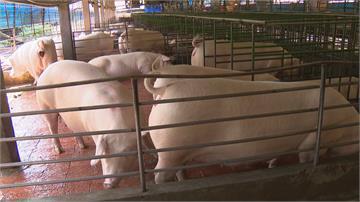 養豬技術升級! 助豬農建立產銷履歷.自有品牌