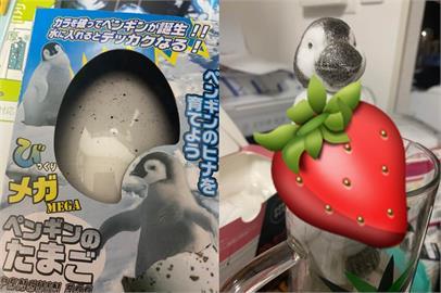可愛企鵝玩具泡水「大崩壞」!主人看傻眼:噁心到我都哭了