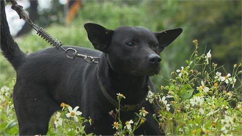 愛犬遭牽走竟送流浪之家 飼主氣炸怒批動保處