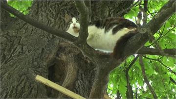 被野狗嚇到心靈受創!波蘭貓咪躲樹上六年