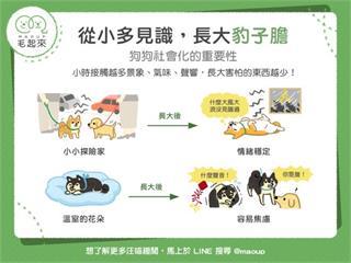 【狗貓訓練術】狗狗社會化好重要?從小多見識,長大豹子膽!|寵物愛很大
