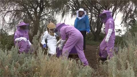 澳洲蜜蜂陷蟲蟲危機 智慧蜂巢抓元凶