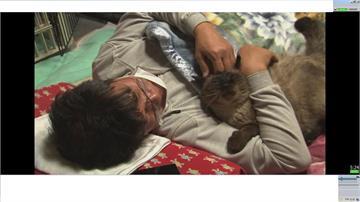 照顧福島流浪貓 男子堅守10年不離