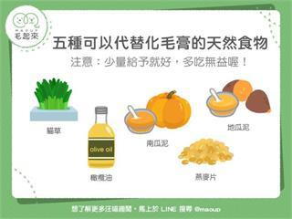 【毛孩食材圖鑑】貓咪福音!5種可以代替化毛膏的天然食物!|寵物愛很大