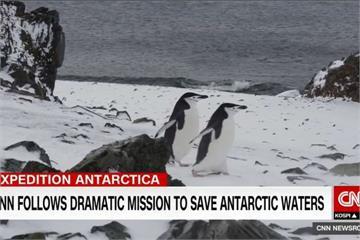 企鵝都要哭了!多國南極捕撈磷蝦 食物減少陷危機