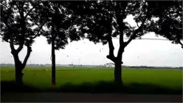 大雨後群燕低飛場面壯觀!專家:為覓食