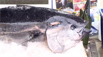 鮪魚外銷轉內銷價跌 強制性休漁聲浪起