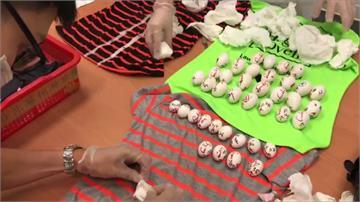 港客攜41顆受精蛋闖關 疑為保育類金剛鸚鵡
