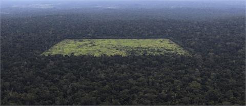 國際施壓減少亞馬遜森林砍伐 巴西要求金援