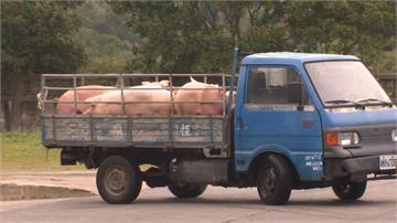 持續保護台灣豬!農委會模擬演練非洲豬瘟疫情爆發