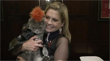 紐約舉辦「貓咪時尚秀」 宣傳用領養代替購買