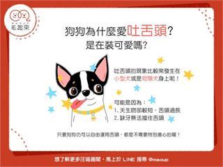 【狗狗小學堂】狗狗為什麼愛吐舌頭?難道是在裝可愛嗎?|寵物愛很大