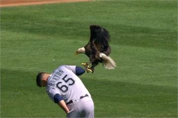 大聯盟場邊趣味多!「白頭鷹降臨」嚇壞球員