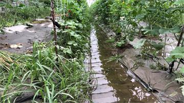 雨炸高雄!美濃瓜泡水全爛 農民損失逾10萬