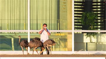 巴西總統確診隔離治療 戶外放風餵美洲鴕鳥
