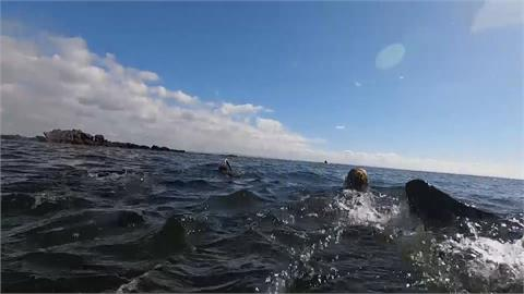 海膽過量影響生態平衡 澳洲鼓勵潛水抓來吃