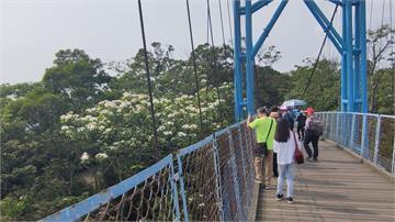 螢火蟲、油桐花太美!遊客鬆懈沒戴口罩