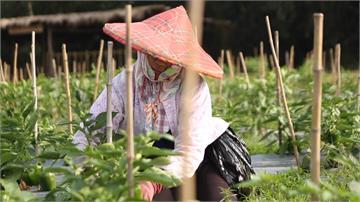 小林村風災後改頭換面變農場 成地方發展領頭羊