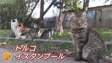 貓咪天堂少了人餵養  土耳其喵星人成「疫」外受災戶