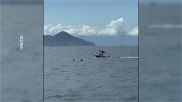 開遊艇衝撞鯨豚群…判刑出爐惡劣駕駛「罰兩萬緩起訴一年」
