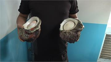「月光螺」比臉大!小吃店業者買下捐水試所復育