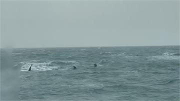 旋轉跳躍 海巡船艇海上巧遇海豚家族