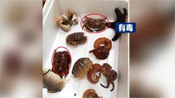 20元螃蟹買回家料理準備吃下肚...一問朋友才發現:這有毒
