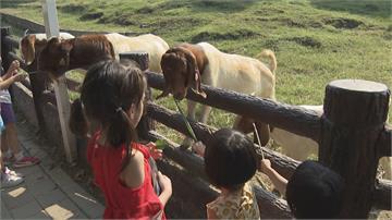 中秋連假來去高雄 壽山動物園、旗津高人氣