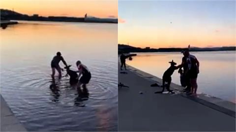 史上最有家教的袋鼠!受困在冰湖中獲救後向救命恩人「主動握手」致謝