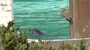 水族館歇業海豚、企鵝被「放生」 動保人士罵爆