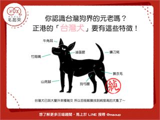 【狗狗小學堂】你認識台灣狗界的元老嗎?正港的「台灣犬」要有這些特徵! 寵物愛很大