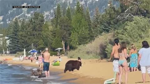 動物也要消暑! 加州海灘驚見母熊帶小熊戲水
