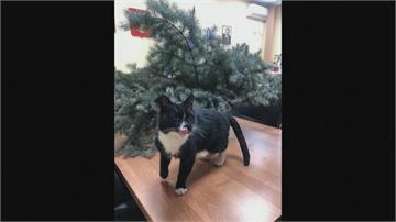 俄國流浪貓被丟棄在回收場 獲救後爆紅 成環境副部長