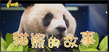 台灣演義/貓熊的專長是政治?被拿來外交的活化石萬年史|2020.08
