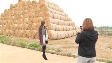 巨型稻草「捲心酥」意外成地景 虎尾稻田打卡正夯