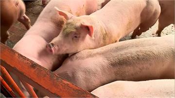 快新聞/台灣從口蹄疫區「正式除名」 豬肉可外銷重返世界舞台
