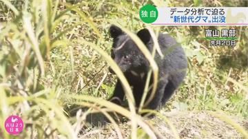日東北頻傳熊出沒 不怕人「新時代黑熊」入侵住宅區