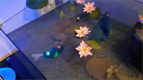 海科館兩隻機械魚遭竊 嫌犯被逮「雙魚」卻失蹤