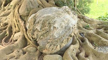 上億年歷史寶物在台東!罕見「木頭化石」出土